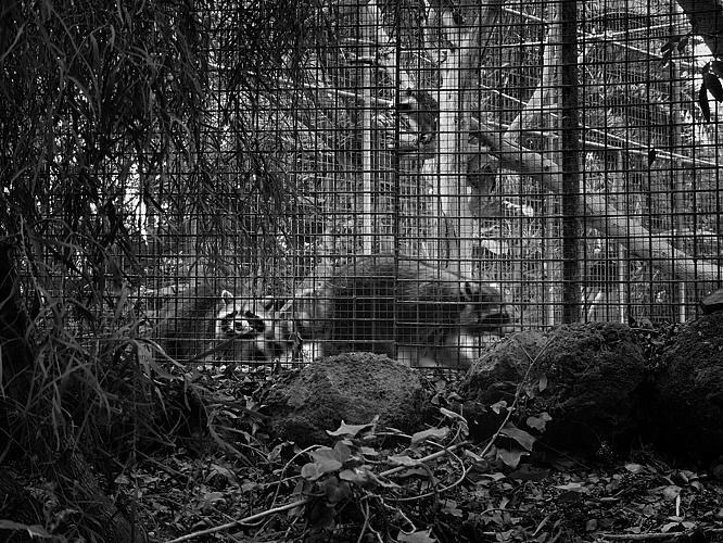 02 zoo