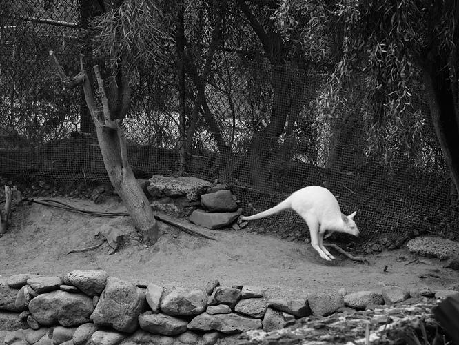 14 zoo