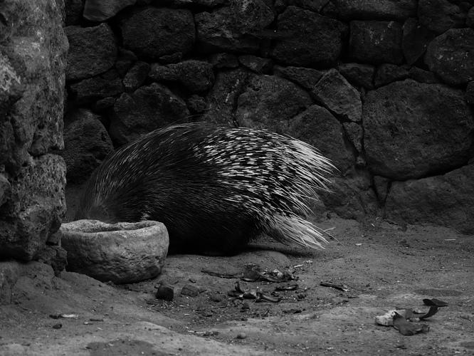 16 zoo