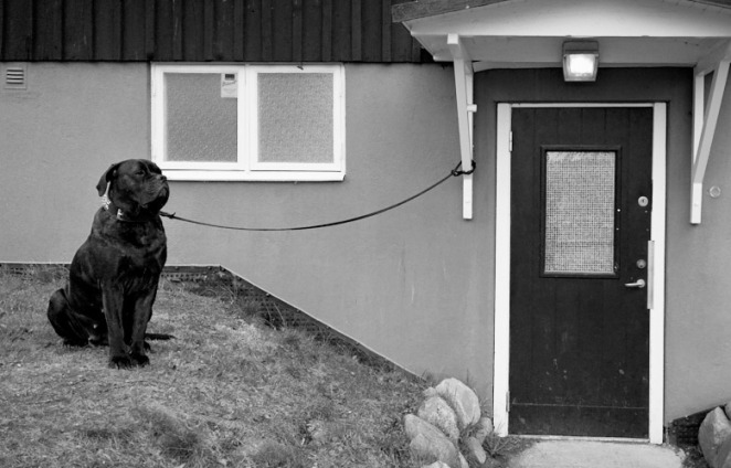 Black dog 2 apr 2016