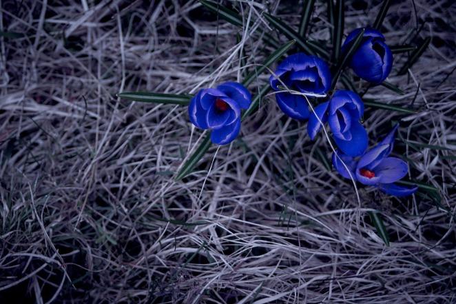 blue-4-apr-2015