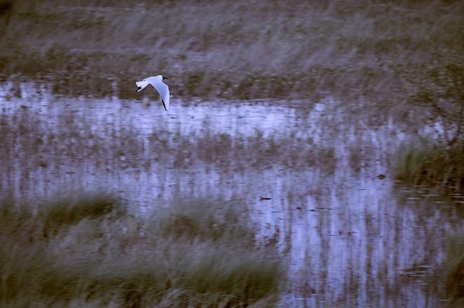 waterland-iv-7-jun-2015