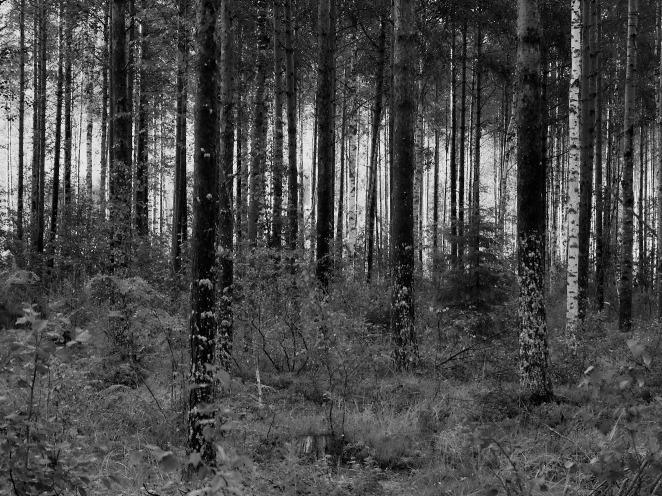 woods-2-aug-2015