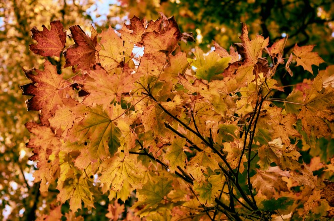 foliage-10-okt-2015