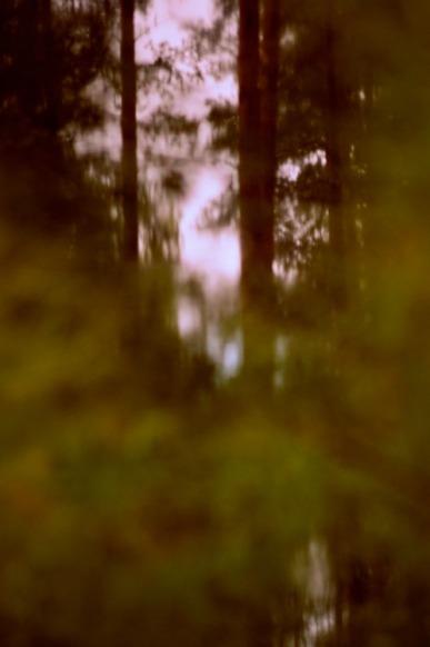 woods-2-aug-2015-1