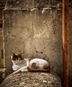 cat-11-april-2016