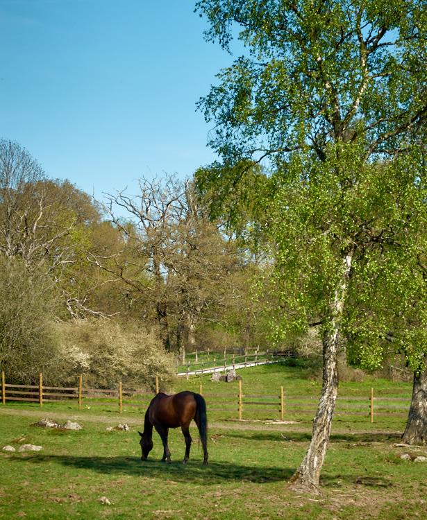 Horse 08 maj 2016