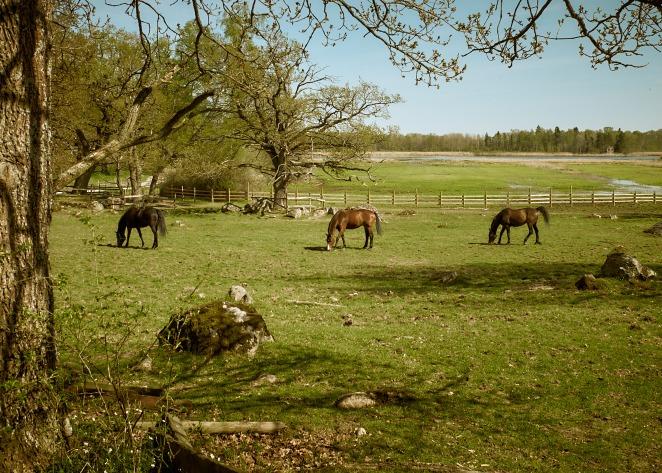 Horses 08 maj 2016