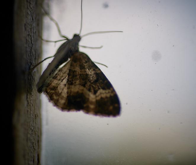 Butterfly 13 juli 2017