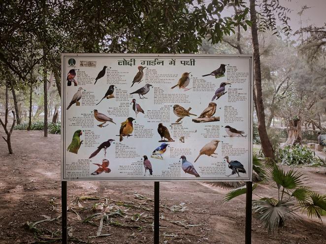 Birds 2 januari 2017
