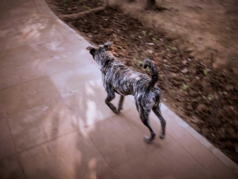 Lodhi Dog 2 januari 2017 1