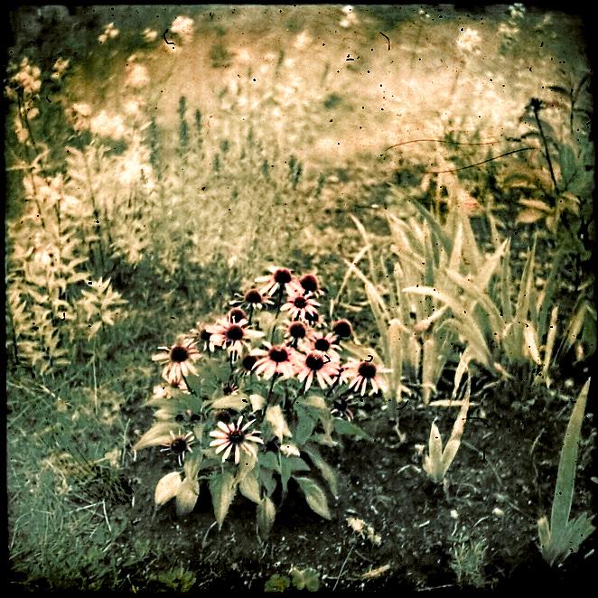 Flowers 14 aug 2019