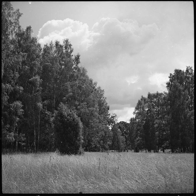 Landscape 15 aug 2019 1