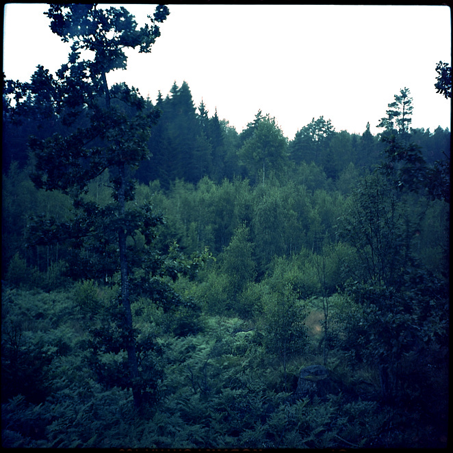 Woods 16 aug 2019